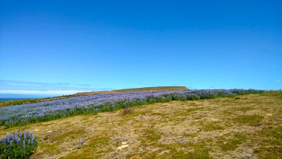 Island blogg-29